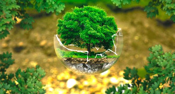 Calidad e impacto Ambiental de Envases y Embalajes Balandrina